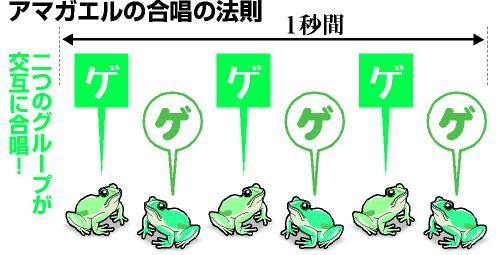 動物 - Magazine cover