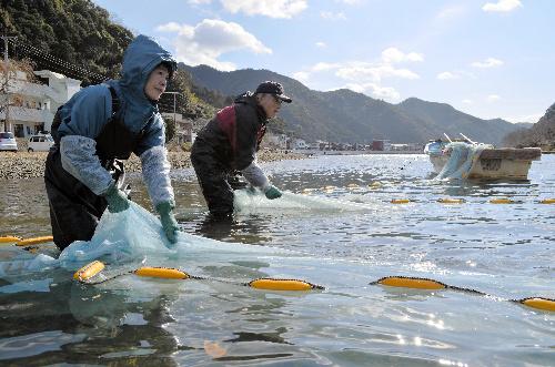 写真:シロウオが入った網を引く松浦紀江さん(左)と夫の利克さん=いずれも宇和島市津島町岩松の岩松川