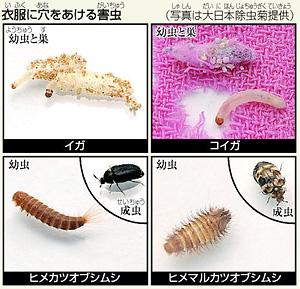 「洋服虫食い写真」の画像検索結果