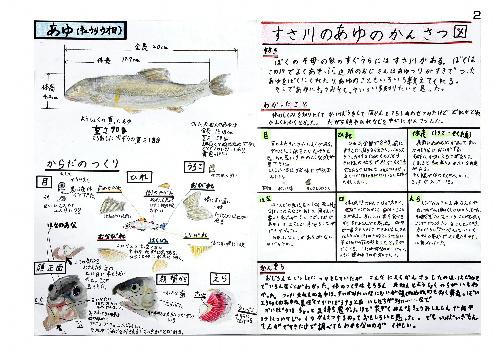 身近な魚、観察生き生き 山口・萩の2小学生が「海 ... : 小3自由研究 : 自由研究