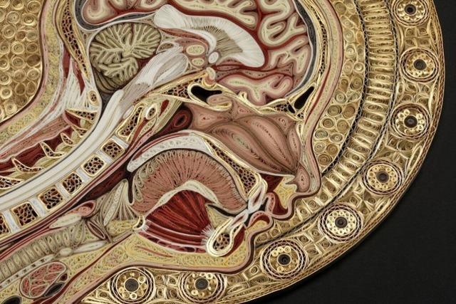 和紙を丸めて解剖図 米国人アーティストの「クイリング」アート