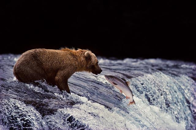 写真家・星野道夫さんが見たアラスカ