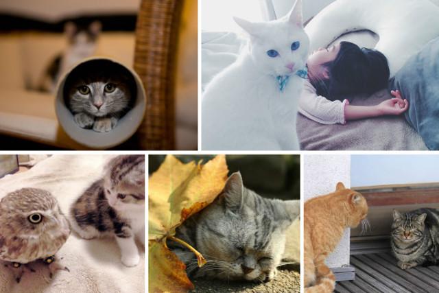 自由気ままにネコ暮らし<フォトギャラリー傑作選:猫編>