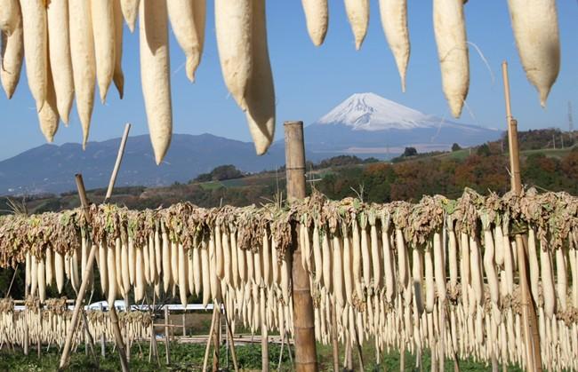写真 静岡県三島市で冬の風物詩となっている大根干し