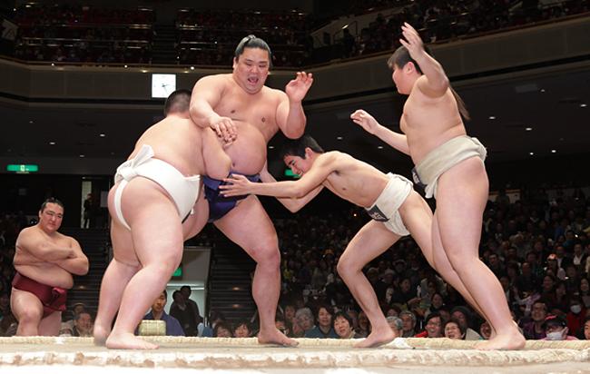 写真 ちびっこ力士たちと相撲を取る妙義龍  ちびっこ力士たちと相撲を取る妙義龍 前へ 一覧 次へ