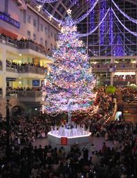 写真:サッポロファクトリーで点灯された巨大なクリスマスツリー:サッポロファクトリーで点灯された巨大なクリスマスツリー=3日午後、札幌市中央区、杉本康弘撮影