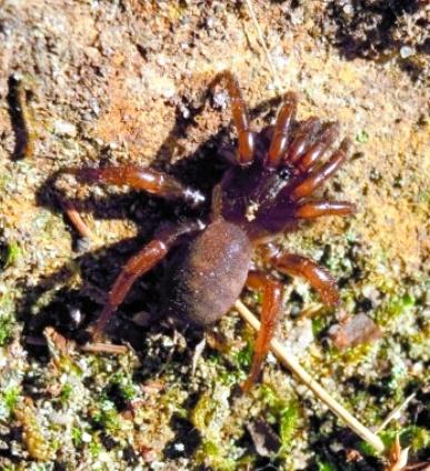 朝日新聞デジタル:62 トタテグモ 土に潜み獲物待ち - 和歌山 - 地域